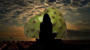 Contemplación Zen de la Chirimoya